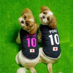 犬用サッカーユニフォームに新型登場~