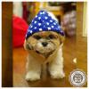 寒い冬もぽかぽか!新作犬用コート