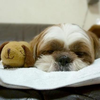 わんちゃんと、もふ寝!