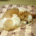 癒しの寝顔、パシャパシャ