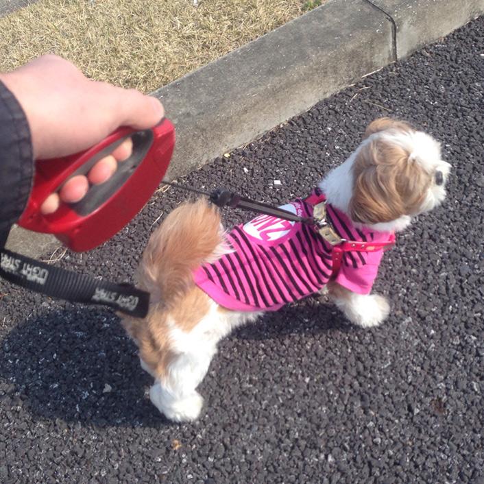 かぼす、初散歩行ってきました