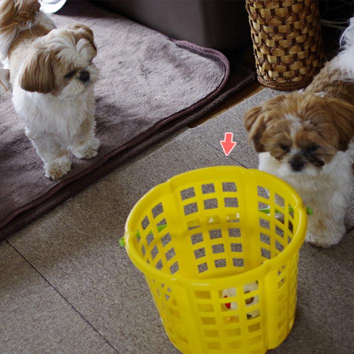洗濯物かぼす