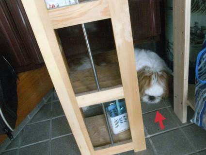 隠れ犬ぽんず