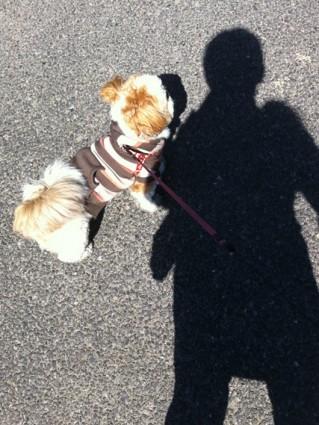 風が強い日の散歩