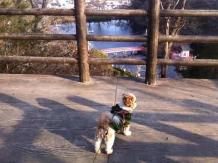 犬と茂原公園