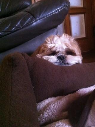 凹った部分で寝るのが好き?