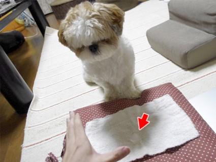氷大好きシーズー犬