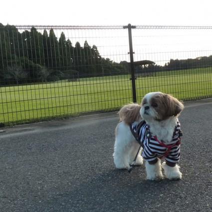 公園で散歩日和