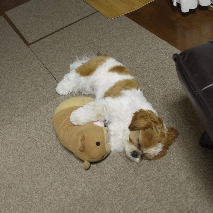 くまさん抱き枕