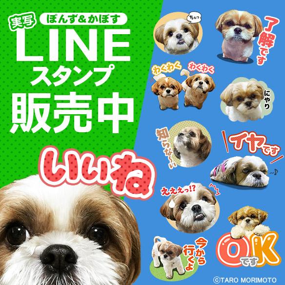 line_shihtzu_onsale