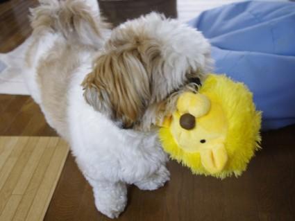 シーズー犬とライオンのぬいぐるみ
