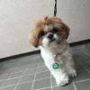 ちょんまげ散歩(おまけ動画あり)