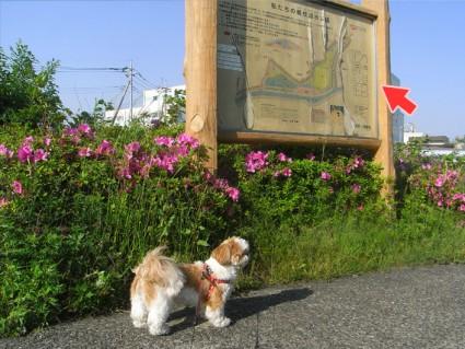 鶴枝遊水公園