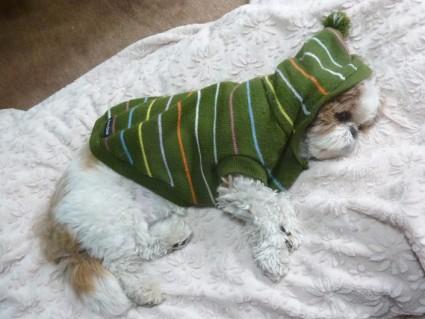 シーズー犬、目の下のできもの