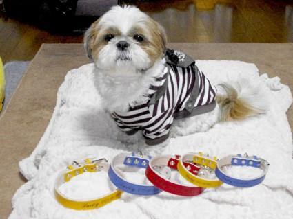 『名前入り首輪』小型犬~中型犬用!