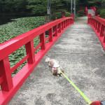 茂原公園でのしのし!