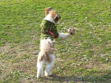 茂原公園で遊んできました!