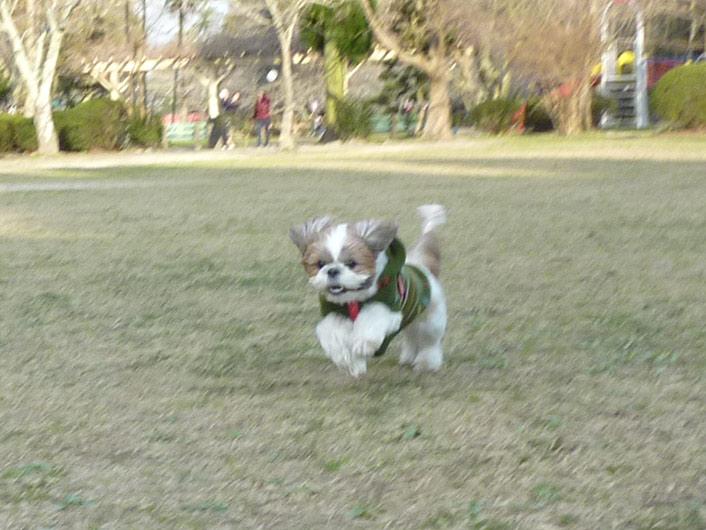 茂原公園で遊んだぽんずー!(後編)