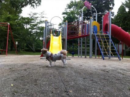茂原公園でシーズー犬と遊ぶ