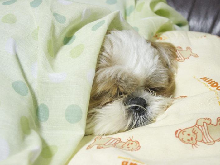 今日の、もふ寝。