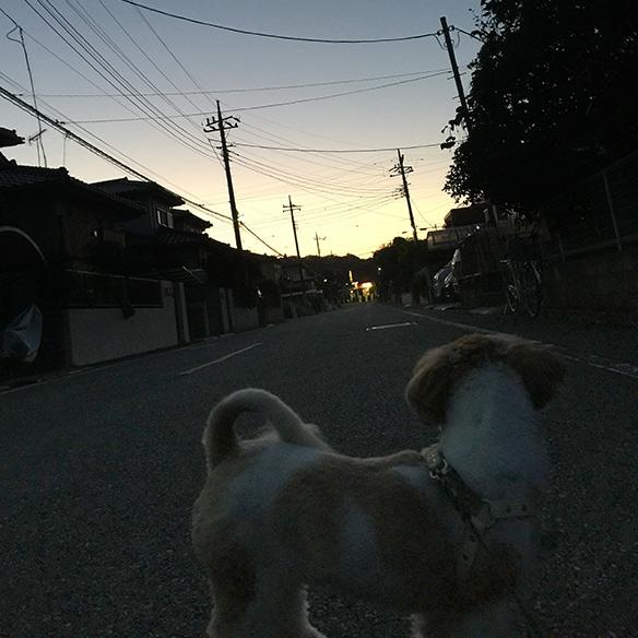 mofumofuoyakoaki