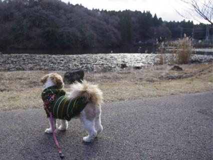 昭和の森の展望台へ