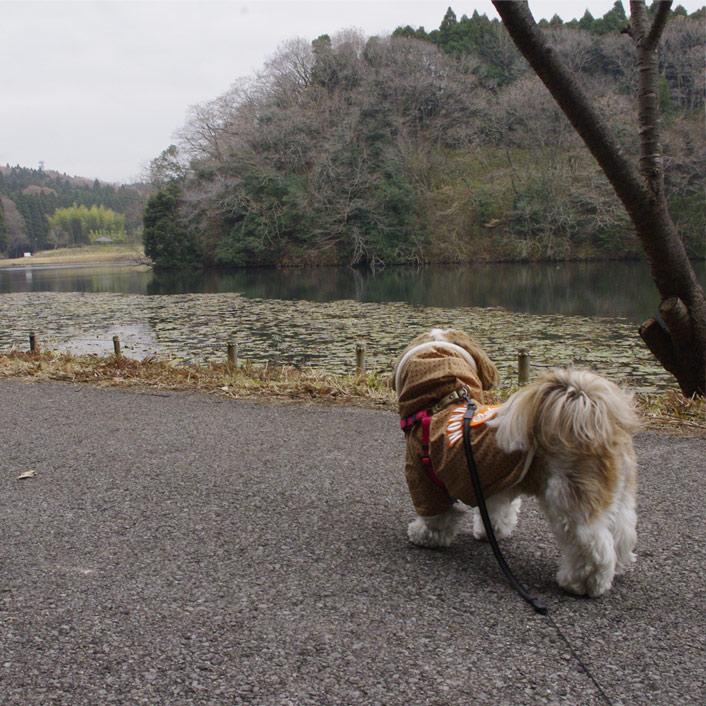 昭和の森でもふもふ散歩!