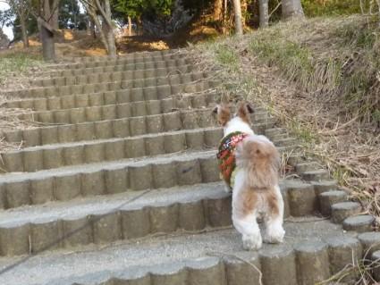 犬と茂原公園へ行く