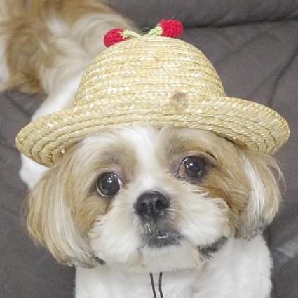 名前入り麦わら帽子、作ったぽんず~!