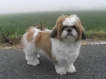 霧の中の早朝散歩