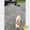 謎の猫ファミリー。