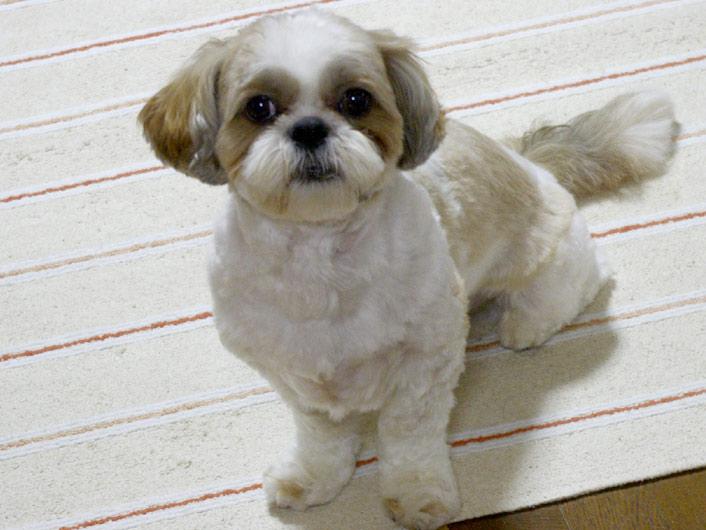 【名前彫刻】NEW小型犬ドッグカラー(首輪)