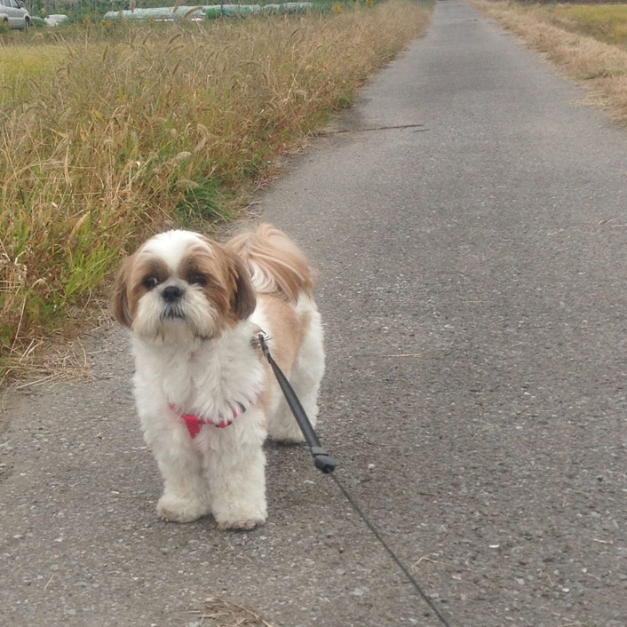 ぷりぷり散歩