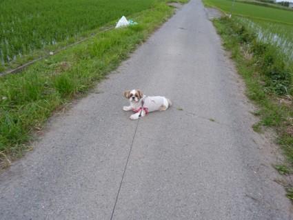 散歩、乗り気じゃない