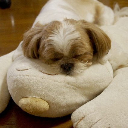 おんぶもふ寝