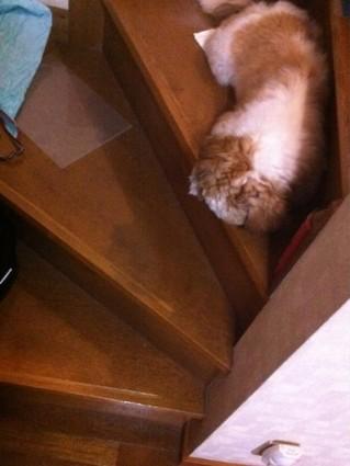 ぽんず、階段を降りられず固まる