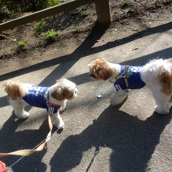 茂原公園、初の親子散歩です