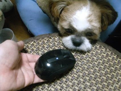 マウスを貸す