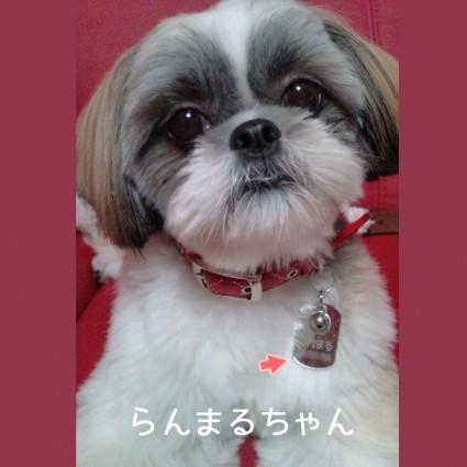 『アトリエあっとぽんず』ペット紹介!