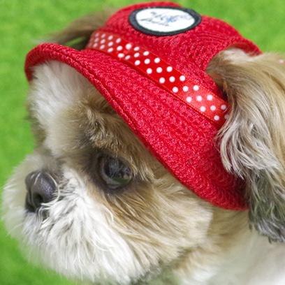 カラフルなペット帽子です♪(犬・猫用)