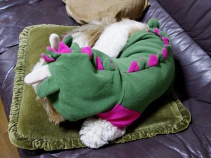 シーズー犬「ぽん獣」
