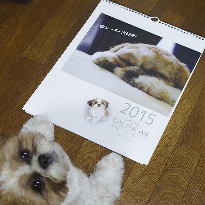 2015年シーズーカレンダー【ぽんず&かぼす】モデル予約開始