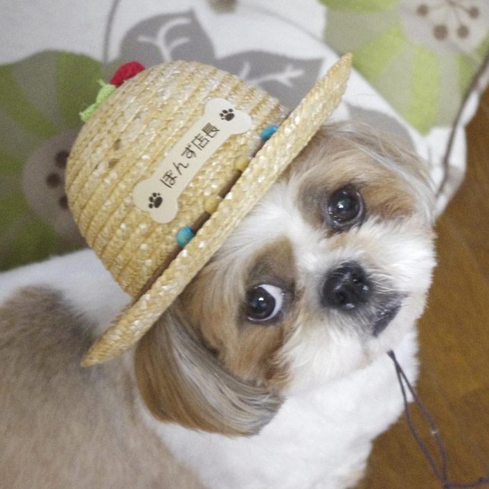 愛犬とのおでかけに、犬の帽子 名札付き!