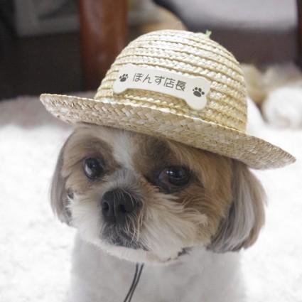 名前入り、犬の帽子(麦わら帽子)