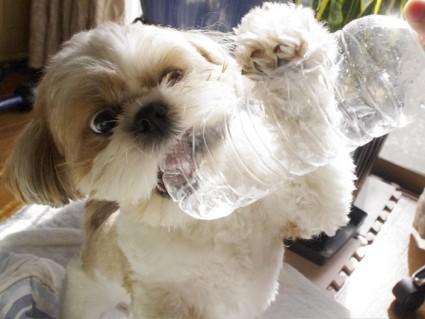 デジタル一眼レフで犬の連写を撮る