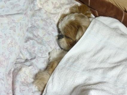 ぐっすり眠る、ぽんず