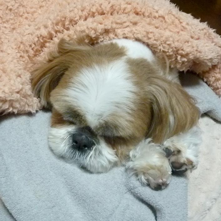 もこもこ毛布で、両手もふ寝