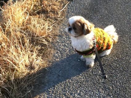 寒い中での散歩