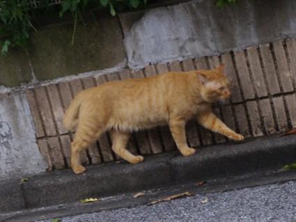 シーズー犬ぽんずと散歩2