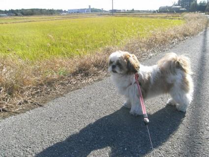農道を散歩